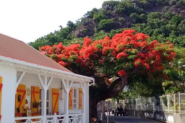 Déménagement professionnel et particulier en Guadeloupe (971)